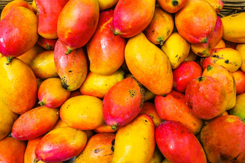大量のマンゴー